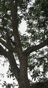 Nut trunk